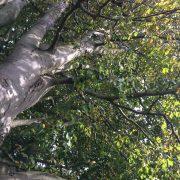 Tree Shinrin Yoku forest nature