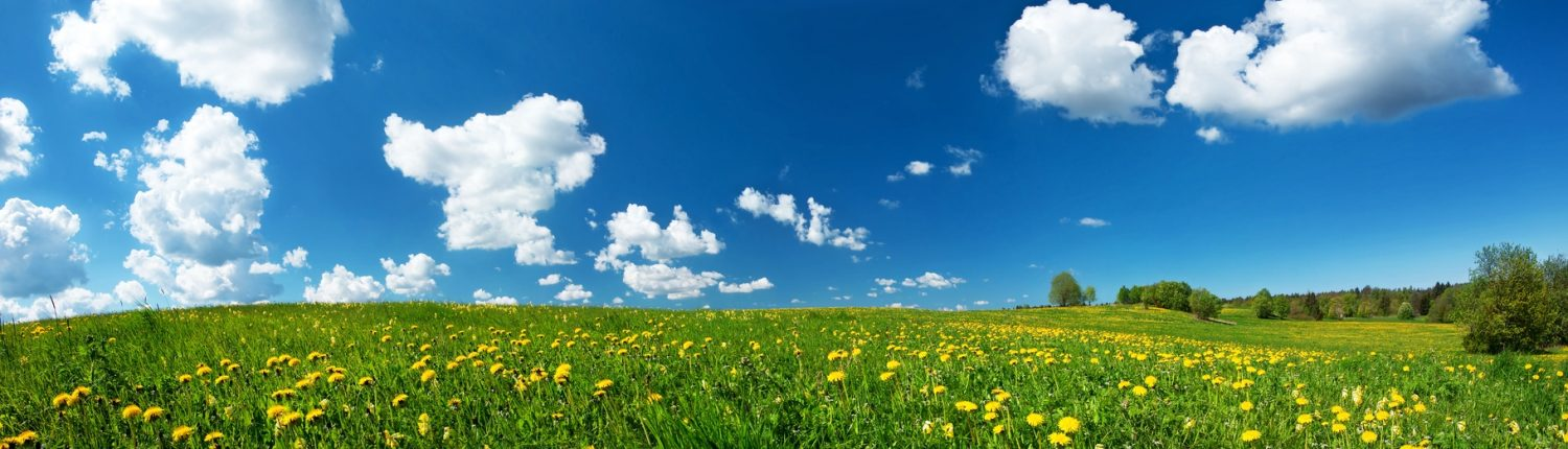 Green field yellow dandelions blue sky clouds nature