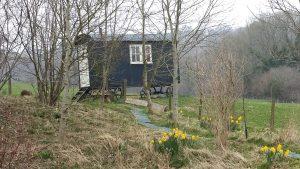 spring shepherds hut fiels daffodil relax