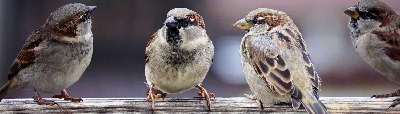 birds nature
