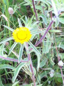 Smiling, Dancing Flower, happy